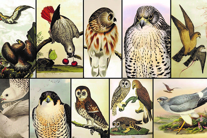 Collage of illustrated birds